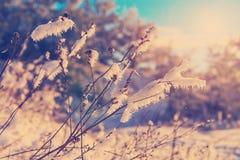 在日落的冬天风景 免版税库存照片
