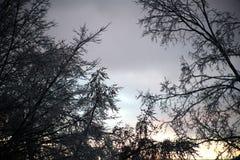 在日落的冰暴后果 库存图片