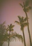 在日落的减速火箭的样式加利福尼亚棕榈树 免版税库存图片
