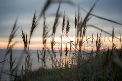 在日落的前景和喜怒无常的颜色的蒂莫西草在海滩的在布里坦尼, 免版税库存照片