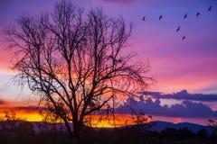 在日落的剪影树 图库摄影