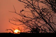 在日落的剪影树 免版税库存图片