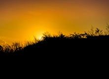 在日落的剪影象草的倾斜小山 库存图片