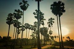 在日落的剪影领域 晚上领域大气 农村泰国 一棵树的遮荫图象与日落的 图库摄影