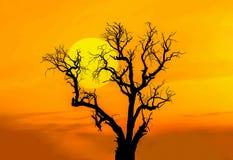 在日落的剪影死的树 免版税库存图片