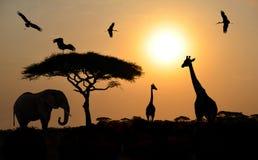 在日落的动物剪影在非洲大草原的徒步旅行队 图库摄影
