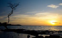 在日落的单独树在Anaeho'omalu海滩 免版税库存图片