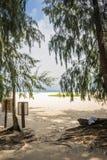 在日落的可可椰子 免版税库存图片
