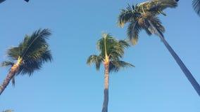 在日落的可可椰子 免版税库存照片