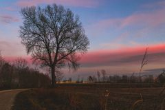 在日落的哀伤的树 免版税库存图片