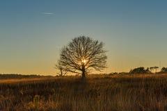 在日落的唯一树 库存图片