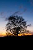 在日落的唯一结构树剪影 图库摄影