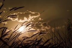 在日落的喷泉草花有多云天空背景 Sepi 库存图片