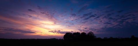 在日落的四棵树 免版税库存照片
