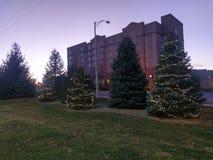 在日落的圣诞树在西部拉斐特印第安纳 免版税库存图片