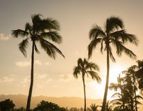 在日落的夏威夷棕榈树剪影 免版税图库摄影