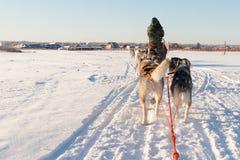 在日落的多壳的爬犁乘驾在冬天风景 免版税图库摄影