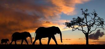 在日落的大象剪影 免版税库存照片