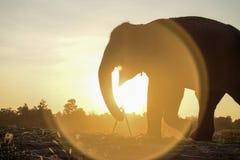 在日落的大象剪影 免版税库存图片