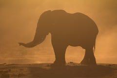 在日落的大象剪影 图库摄影