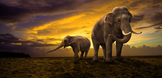 在日落的大象家庭 免版税库存照片