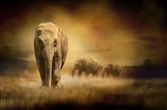在日落的大象 免版税库存图片