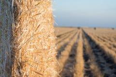 在日落的大麦大包 免版税库存图片