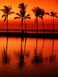 Paradise beach at  sunset with  tropical palm trees  库存图片