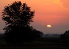 在日落的太阳与树 库存图片