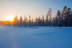 在日落的太阳在冬天森林 免版税图库摄影