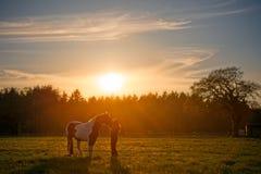 在日落的女孩拥抱的马 免版税图库摄影
