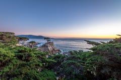 在日落的孤立柏树视图沿著名17英里驱动-蒙特里,加利福尼亚,美国 免版税库存照片
