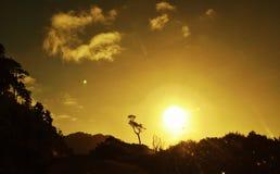 在日落的孤立树在山坡 库存照片