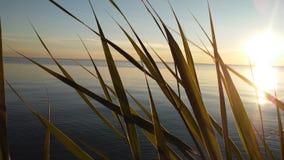 在日落的密执安湖 免版税库存图片