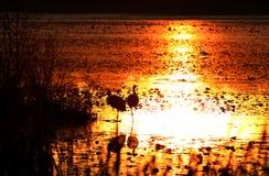 在日落的密执安湖 库存照片