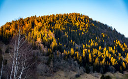 在日落的山坡风景 库存照片