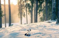 在日落的山滑雪在多雪的森林里 免版税库存图片