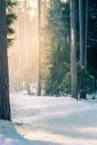 在日落的山滑雪在多雪的森林里 免版税库存照片