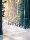 在日落的山滑雪在多雪的森林里 库存图片