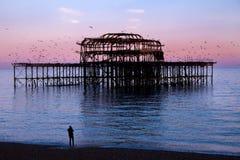 在日落的布赖顿西部码头与飞行围绕它的鸟 免版税库存照片