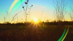 在日落的干燥秋天草 股票视频