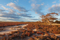 在日落的当地澳大利亚海滩灌木风景 免版税库存图片