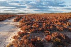 在日落的当地澳大利亚海滩灌木风景 库存照片