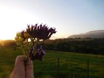 在日落的当地野花 库存图片