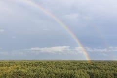 在日落的彩虹在森林在自然公园叫Lommeles撒哈拉大沙漠在比利时 免版税库存图片
