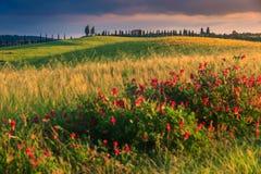 在日落的意想不到的托斯卡纳风景在皮恩扎,意大利,欧洲附近 库存照片