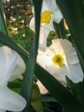在日落的春天花 免版税库存图片