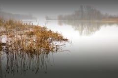在日落的春天雾 免版税图库摄影