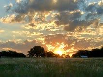 在日落的晚上与云彩和象草的领域 库存图片
