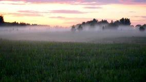在日落的有薄雾的领域 股票录像
